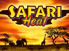 Казино на деньги Safari Heat
